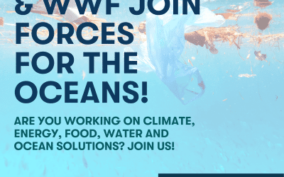 Impact Hub and WWF Join Forces for the Oceans!