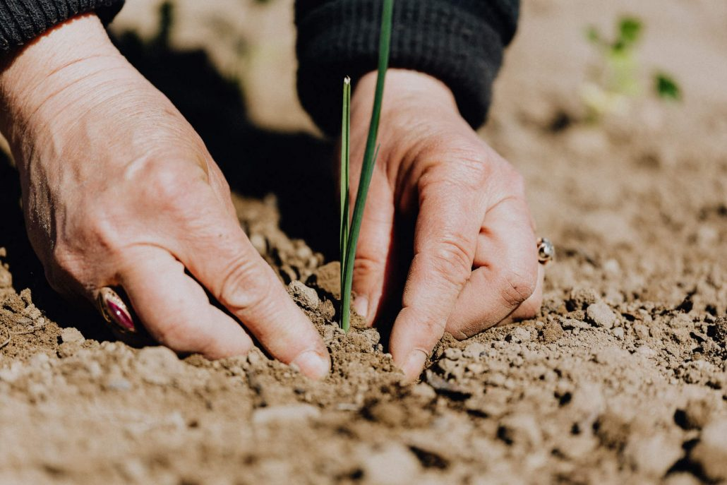 corporate-social-responsibility-seed